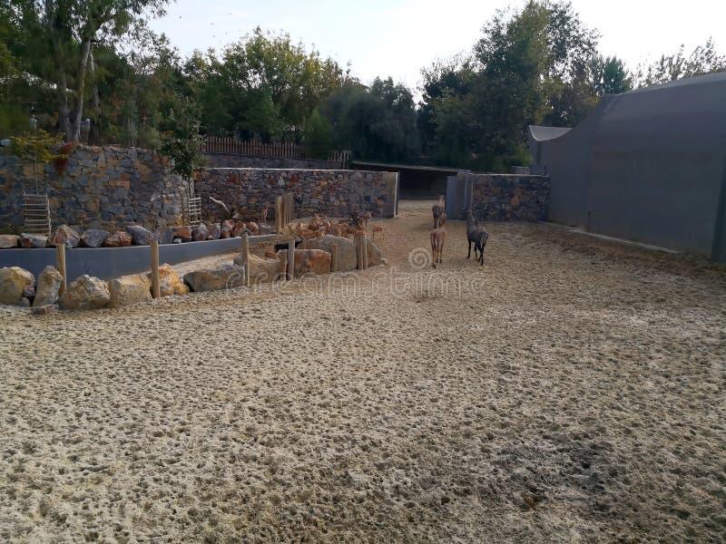 Donkeis in Faruk Yalcin-dierentuin in Istanboel stock afbeeldingen