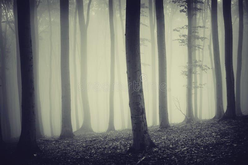 Donker angstaanjagend bos met vreemde griezelige gloed en mist royalty-vrije stock fotografie
