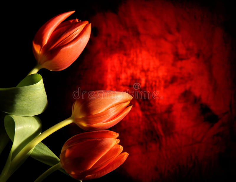 Donker bloemontwerp stock fotografie
