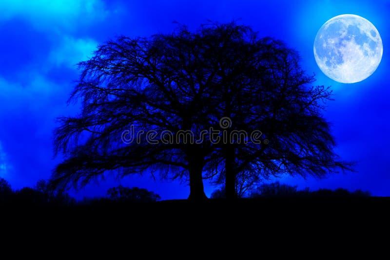 Donker boomsilhouet met een gloeiende volle maan stock fotografie