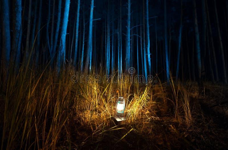Donker bos bij nacht dat door oude gaslamp wordt aangestoken royalty-vrije stock afbeeldingen