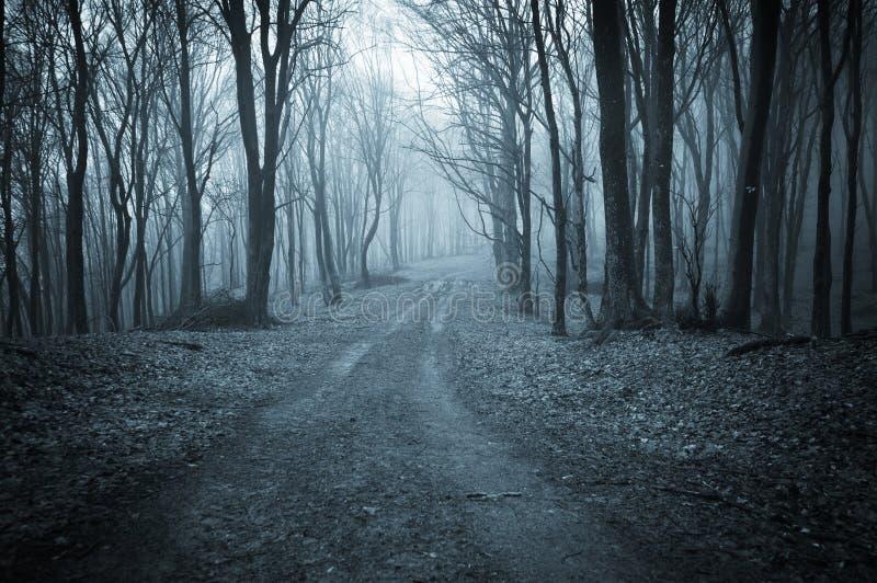 Donker bos in de recente herfst stock foto