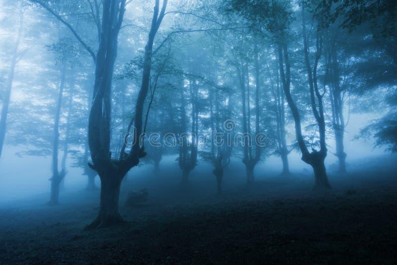 Donker bos met dichte mist royalty-vrije stock foto's