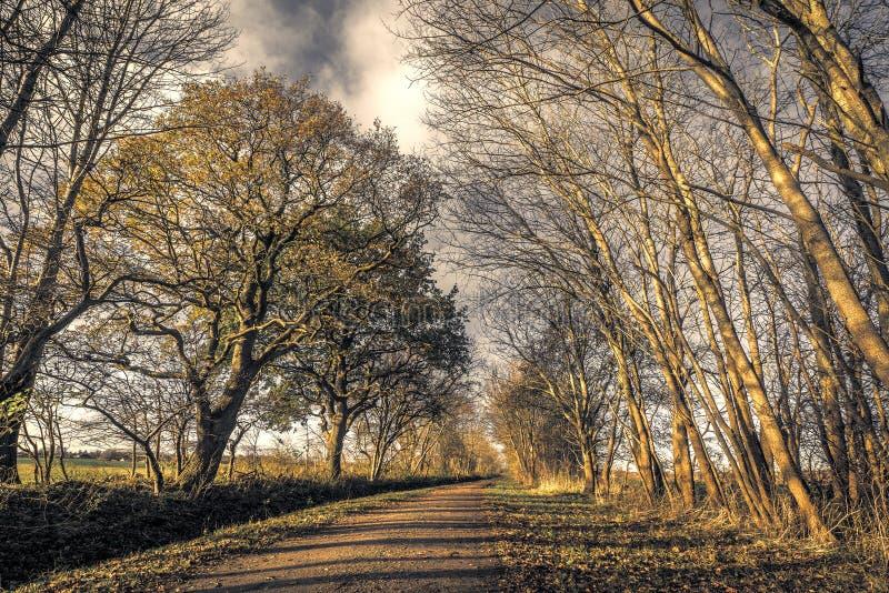 Donker bos met een aardweg in de herfst royalty-vrije stock fotografie