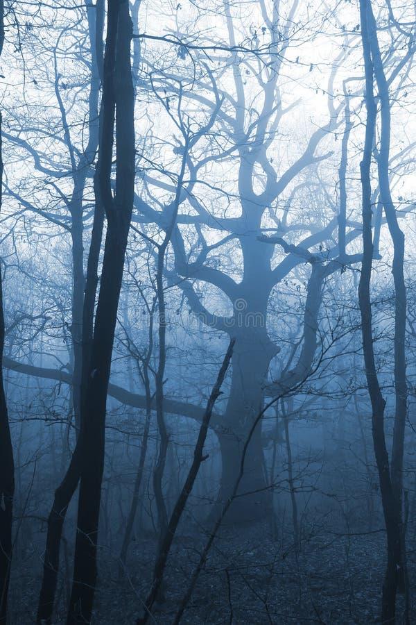 Donker bos met mist royalty-vrije stock afbeeldingen