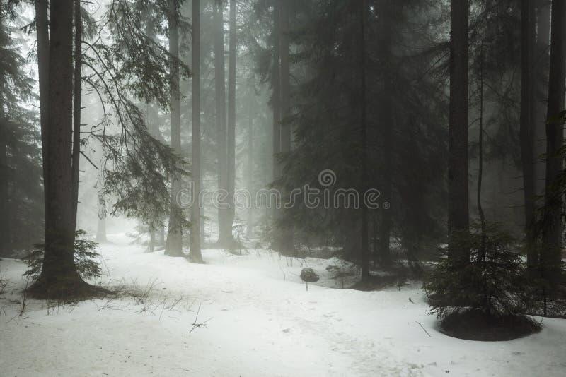 Donker bos met sneeuw in de winter royalty-vrije stock afbeelding