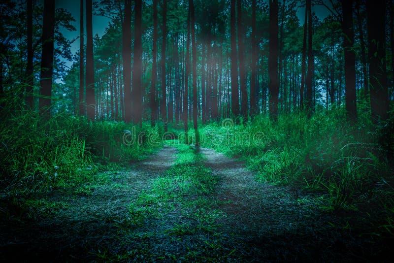 Donker bos in mist in de ochtend met weg door een donker bos royalty-vrije stock afbeeldingen