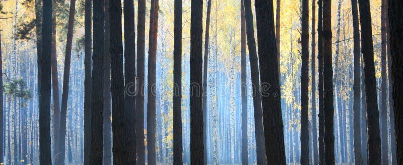 Donker de herfstbos met mist stock afbeelding
