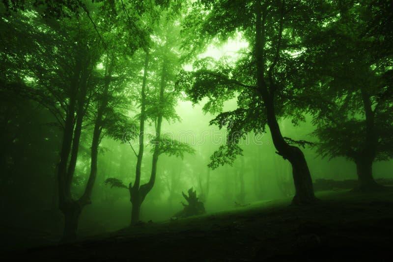 Donker diep bos met mist stock foto's
