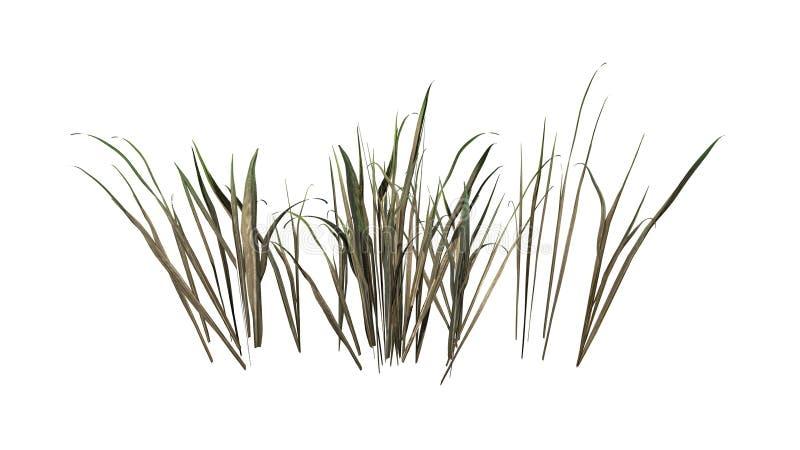 Donker Dik Gras in de zomer vector illustratie