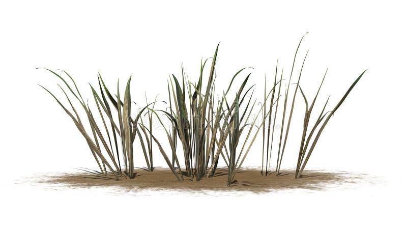 Donker Dik Gras op een zandgebied stock illustratie