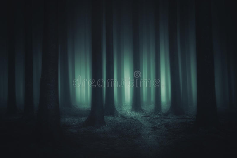 Donker en eng bos stock afbeelding