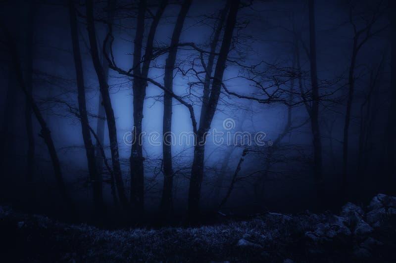 donker en eng bos bij nacht royalty-vrije stock afbeeldingen