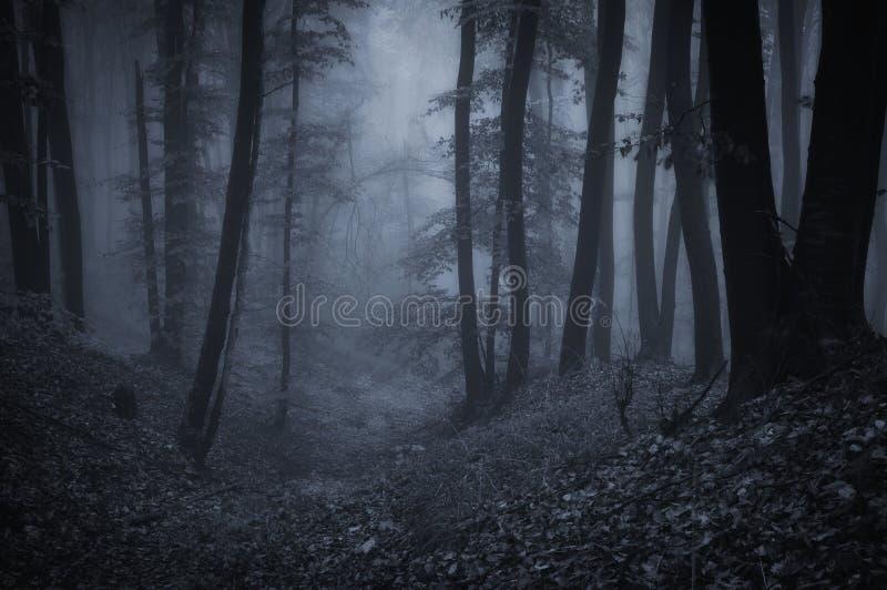Donker eng bos met mist bij nacht stock foto's