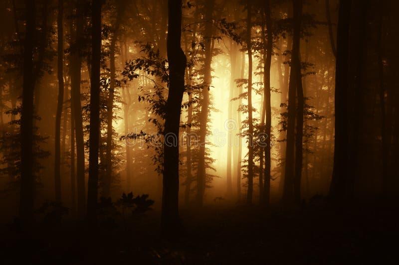 Donker eng bos met mist bij zonsondergang royalty-vrije stock afbeelding