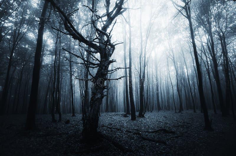 Donker eng geheimzinnig bos met mist op Halloween stock foto's