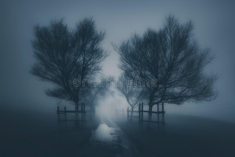 Donker eng landschap met weg het omringen door bomen en mist stock afbeelding