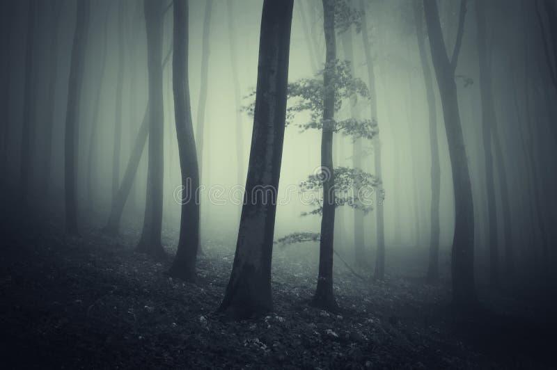Donker etherisch bos met mist royalty-vrije stock afbeelding
