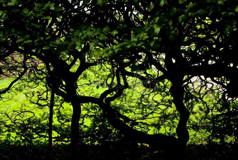 Donker gebladerte en verdraaide bomen stock afbeelding