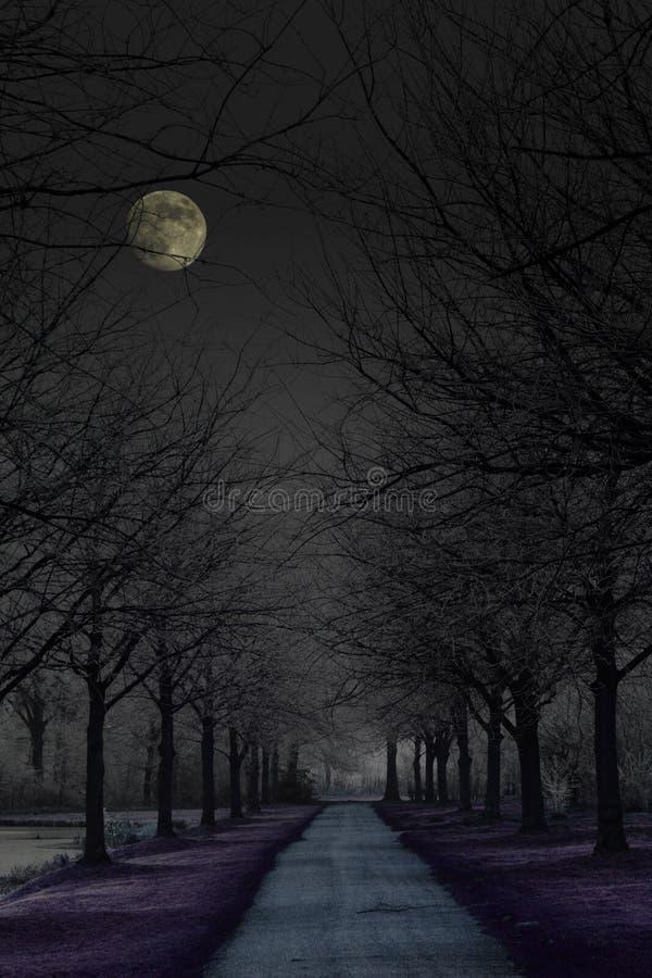 Donker geheimzinnig park stock afbeelding