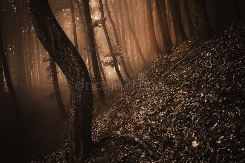 Donker griezelig bos met rode mist op Halloween stock foto