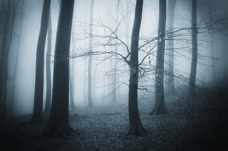 Donker griezelig eng bos met mist op een recente de herfstavond royalty-vrije stock foto