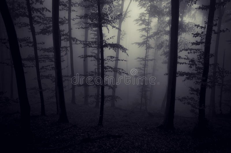Donker griezelig griezelig bos met mist bij nacht royalty-vrije stock foto