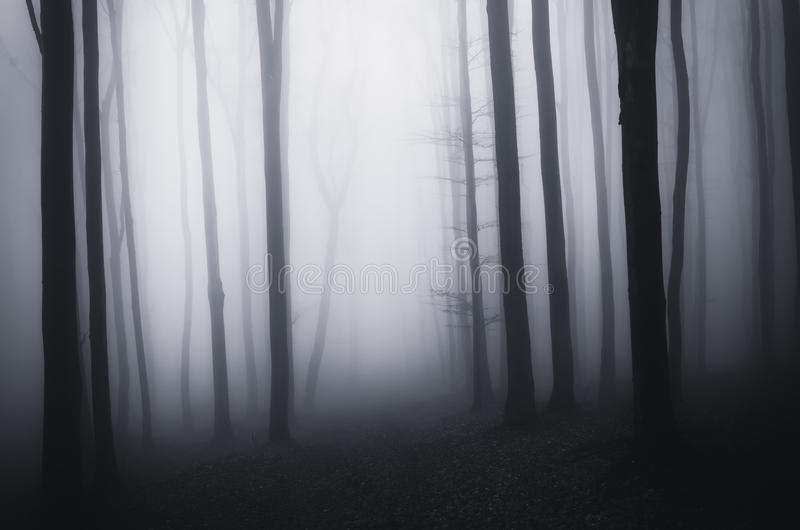 Donker griezelig griezelig bos op Halloween met mist royalty-vrije stock foto's
