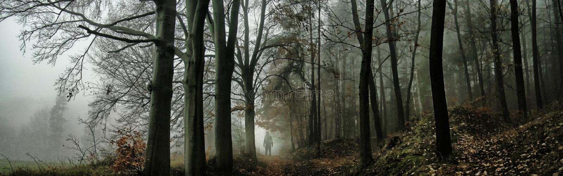 Donker griezelig mistig bos stock afbeeldingen