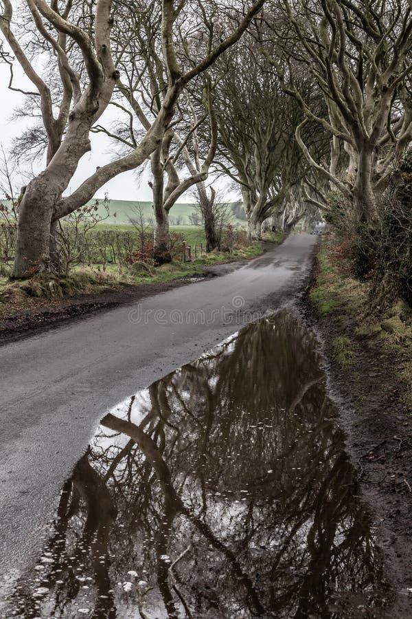 Donker hagenweg en landbouwbedrijfgebied royalty-vrije stock foto