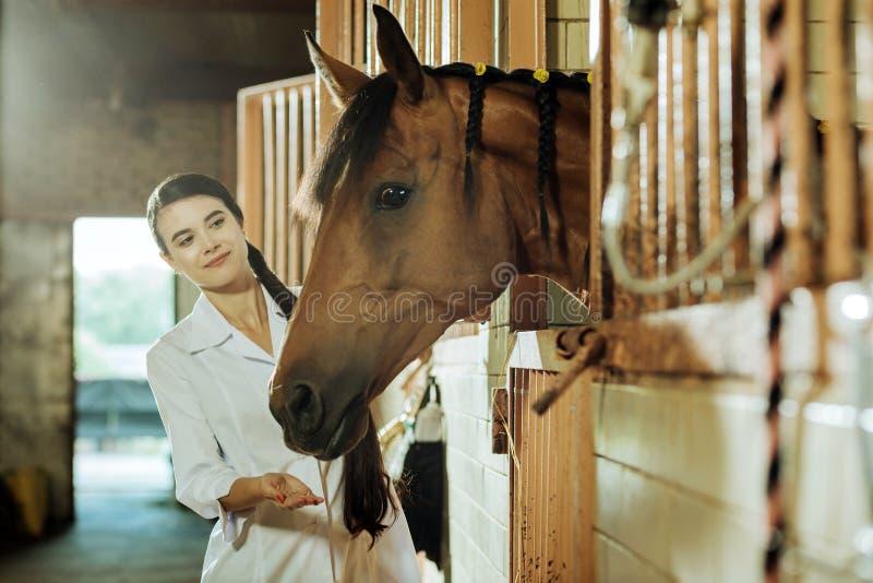 Donker-haired aantrekkelijke vrouw met lange vlecht die paard wat voedsel geven royalty-vrije stock afbeelding