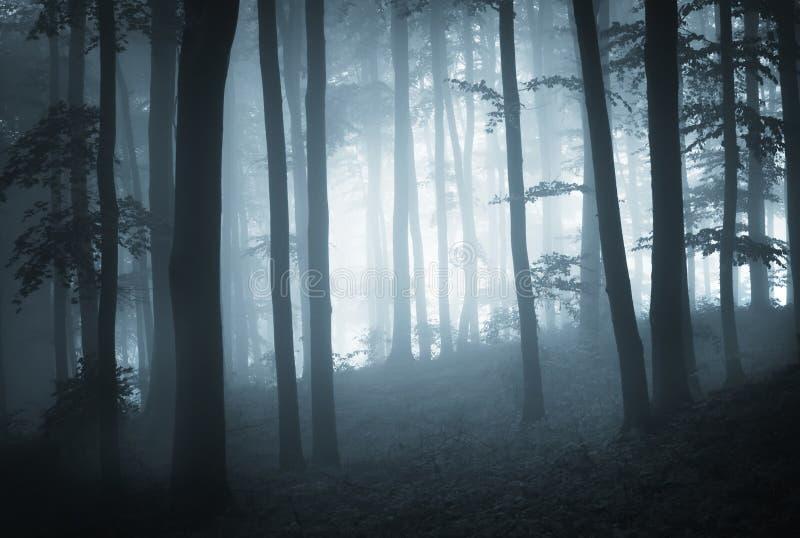 Donker hout met blauwe mist en boomsilhouetten royalty-vrije stock afbeelding