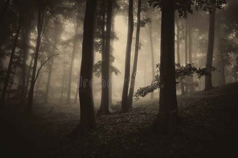 Donker hout met bomen en mist stock afbeelding