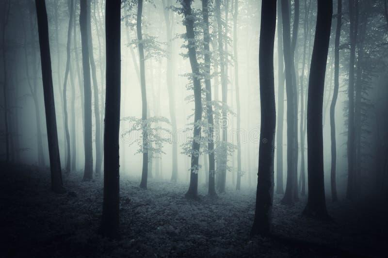 Donker hout met de blauwe bomen van de misttrog op Halloween stock afbeeldingen