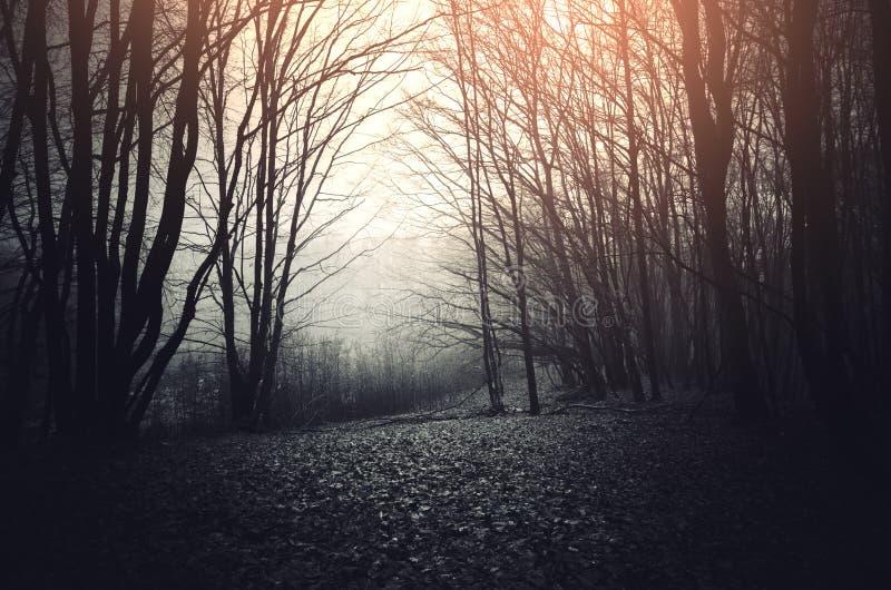 Donker hout met surreal licht royalty-vrije stock afbeelding