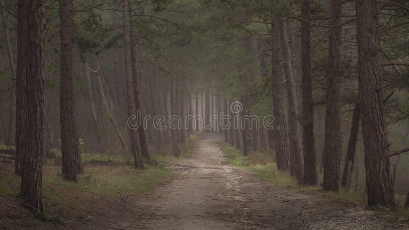 Donker humeurig bos met weg door het vroege donkere ochtendgang stock foto's