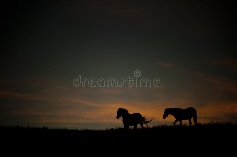 Donker landschap met wild paarden bij zonsondergang royalty-vrije stock foto's