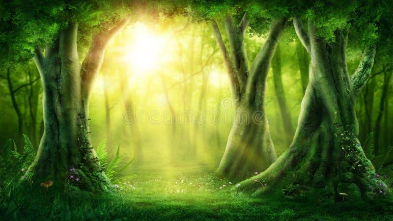 Donker magisch bos stock afbeelding