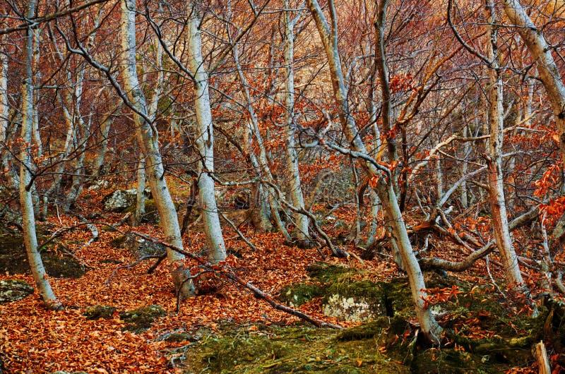 Donker mystiek bos stock afbeelding