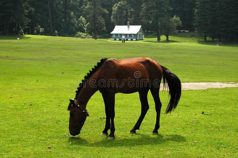 Donker Paard royalty-vrije stock afbeeldingen