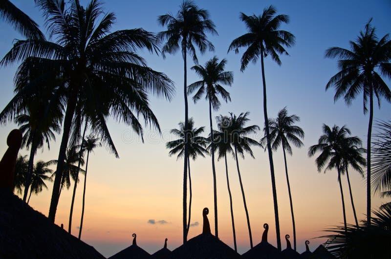 Donker silhouet van palmen in zonsonderganglichten royalty-vrije stock foto