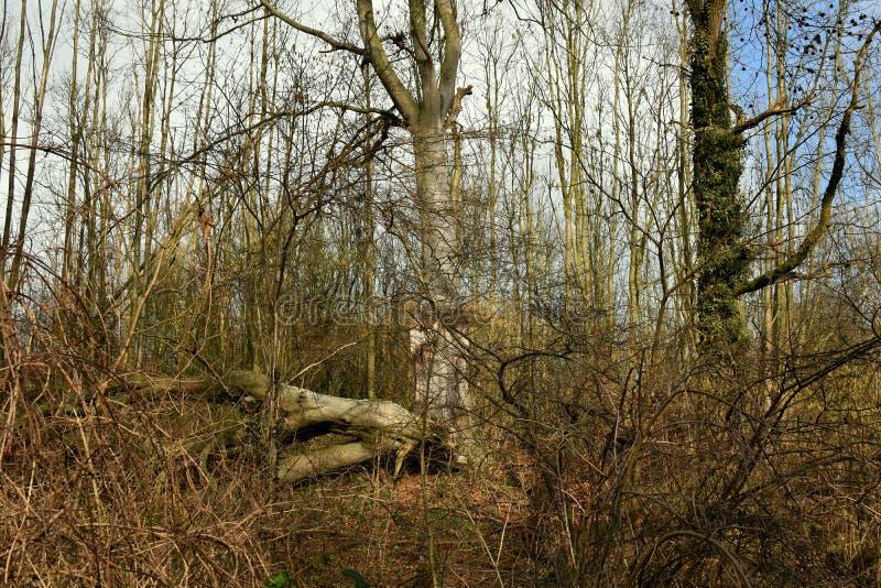 Donker somber geheimzinnig bos in de ochtend stock foto