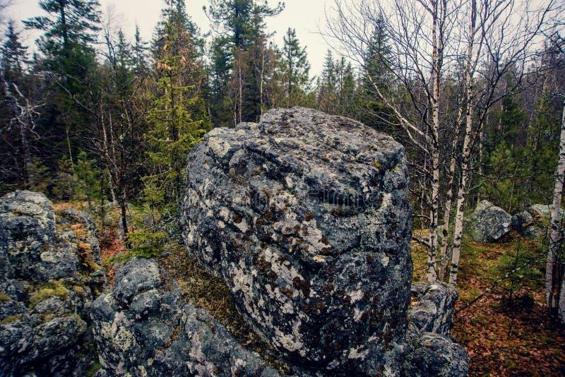 Donker somber mysticusbos in de bergen met reusachtige rotsen in de voorgrond De stenen, de wortels van de bomen en het land zijn stock foto