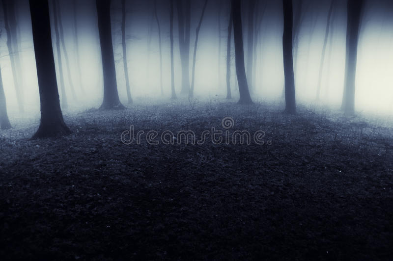 Donker surreal bos met mist bij nacht stock foto