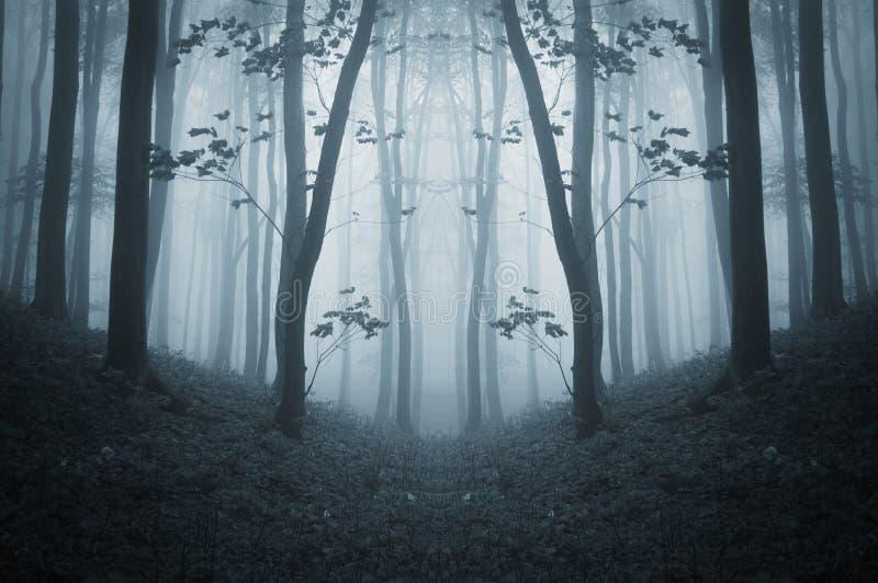 Donker symmetrisch griezelig bos met mist in de recente herfst royalty-vrije stock fotografie