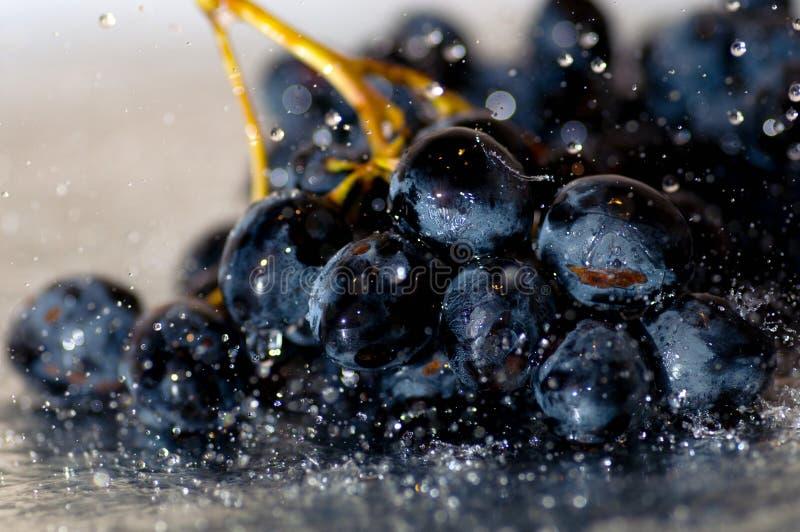 Donkerblauwe druiven onder een regen Macro fotografie stock fotografie