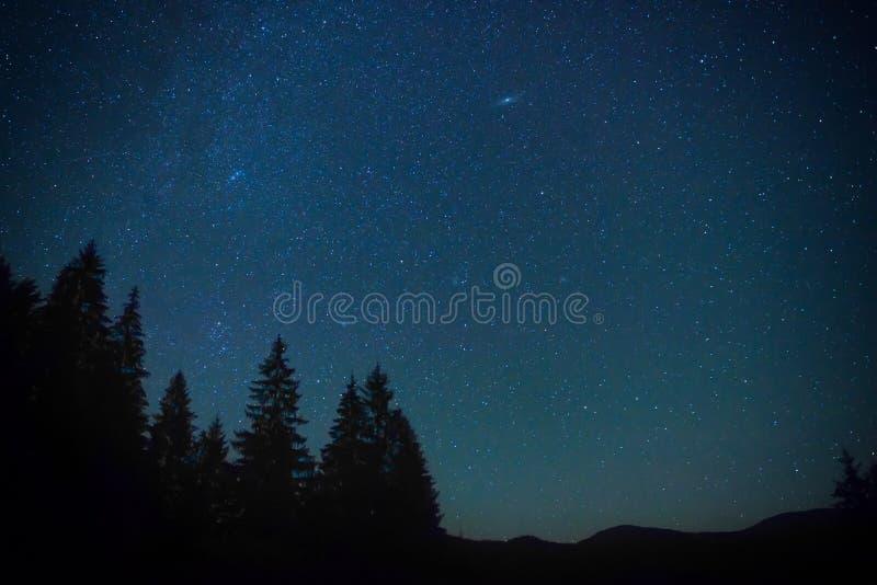 Donkerblauwe nachthemel boven het geheimzinnigheid bos stock afbeeldingen