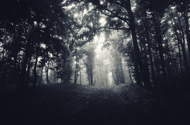 Donkere achtervolgde weg door het hout royalty-vrije stock afbeelding