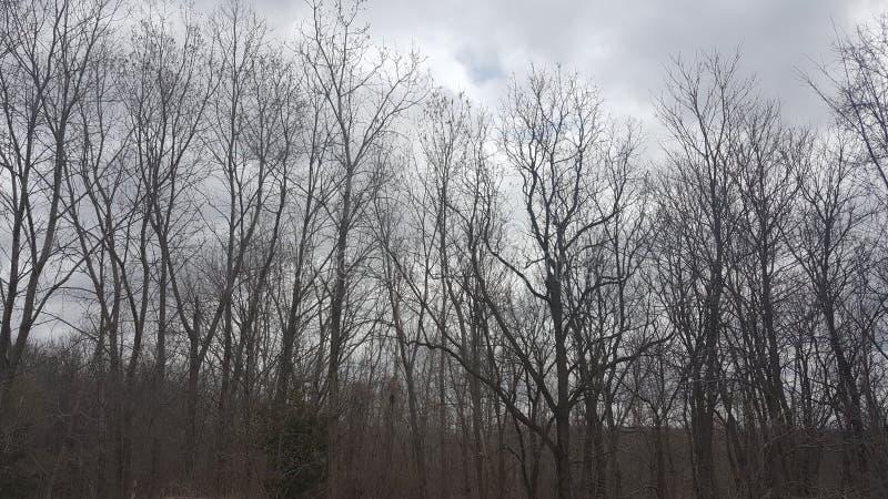 Donkere bomen stock afbeelding