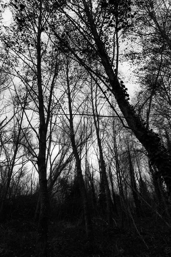 Donkere bomen royalty-vrije stock afbeelding